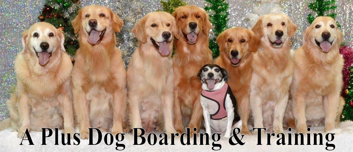 A Plus Dog Boarding & Training